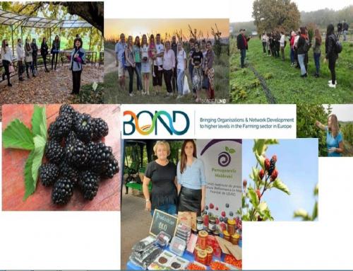 Povești de succes obținute în cadrul proiectului BOND